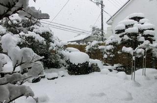 大雪 1.jpg